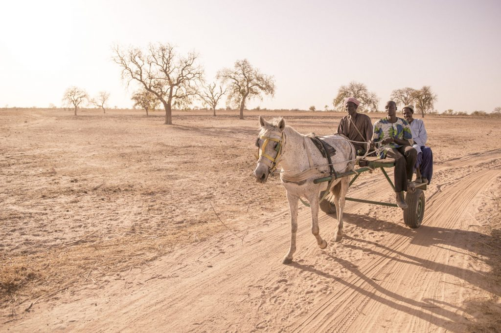 Travelling by donkey cart, The Gambia 2018